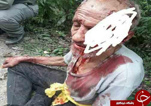 حمله پلنگ به چوپان در بابل+ تصاویر