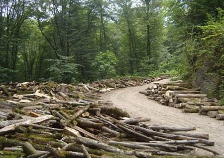 تعویض مدیر عامل نکاچوب؛ تنها راه حل مسئولان برای حل مشکلات کارگران تعدیل شده / آتشی که مافیای چوب به محافظان جنگل زد